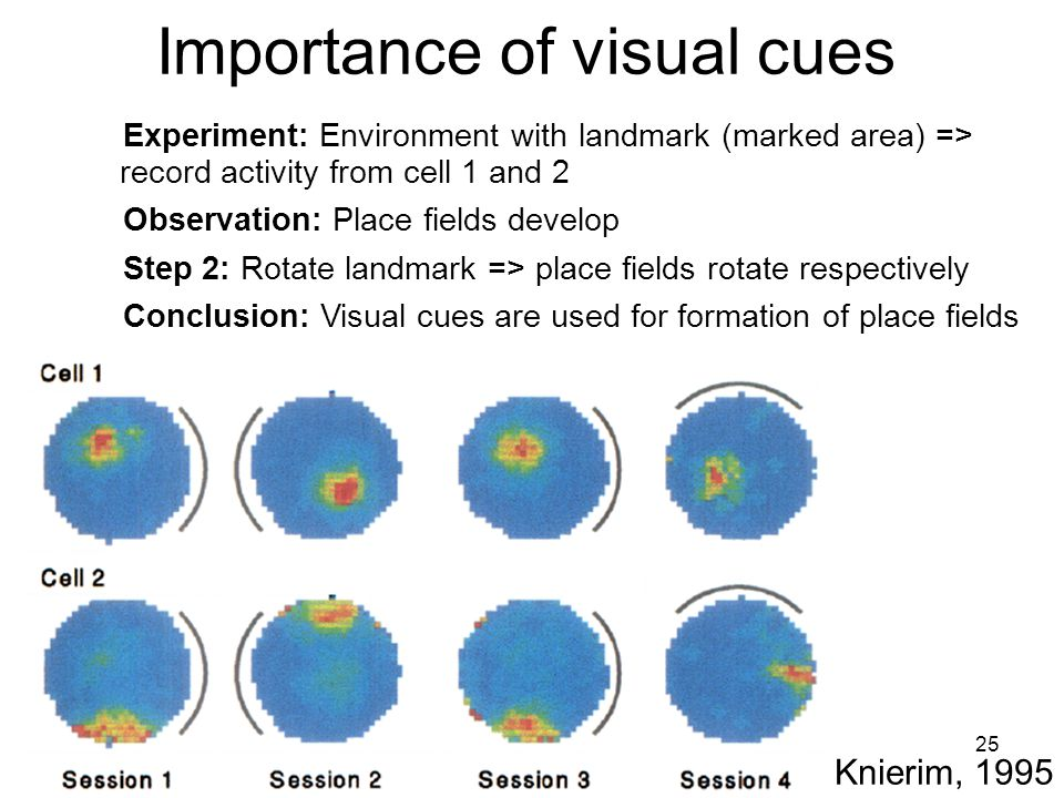 25 Importance of visual cues Knierim, 1995 Experiment: Environment with landmark (marked area) => record activity from cell 1 and 2 Observation: Place fields develop Step 2: Rotate landmark => place fields rotate respectively Conclusion: Visual cues are used for formation of place fields