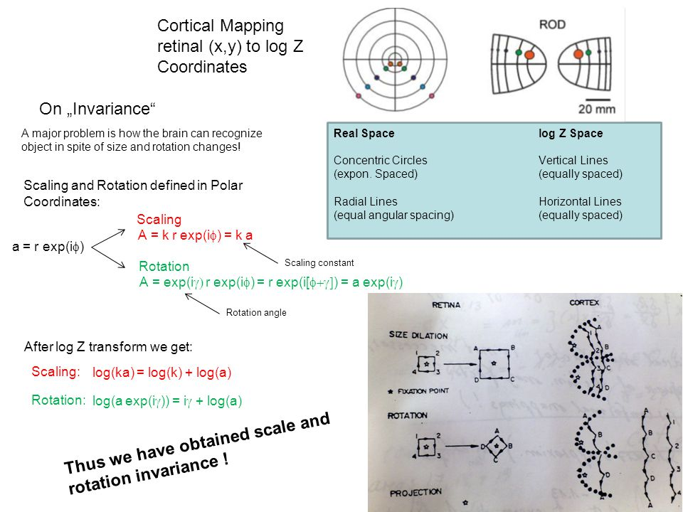 Cortical Mapping retinal (x,y) to log Z Coordinates Real Spacelog Z Space Concentric Circles Vertical Lines (expon.