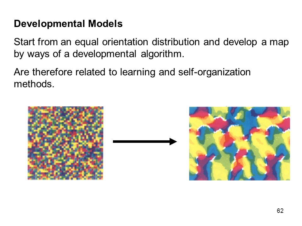 62 Developmental Models Start from an equal orientation distribution and develop a map by ways of a developmental algorithm.