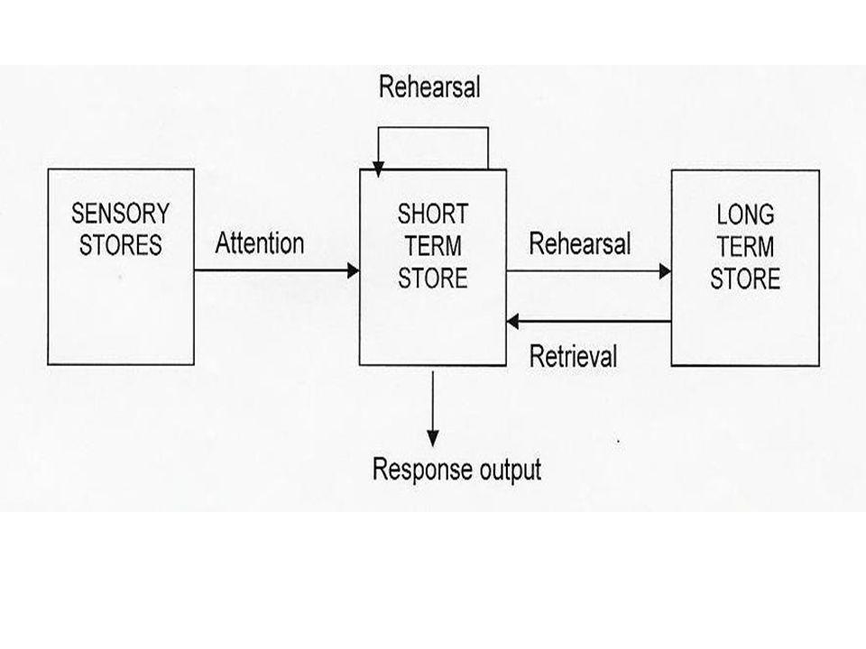 The Filter Model  Broadbent ' s (1958) filter model of attention.
