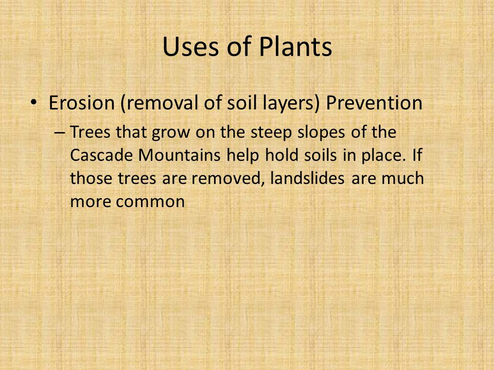 Erosion (removal of soil layers) Prevention – Trees that grow on the steep slopes of the Cascade Mountains help hold soils in place.