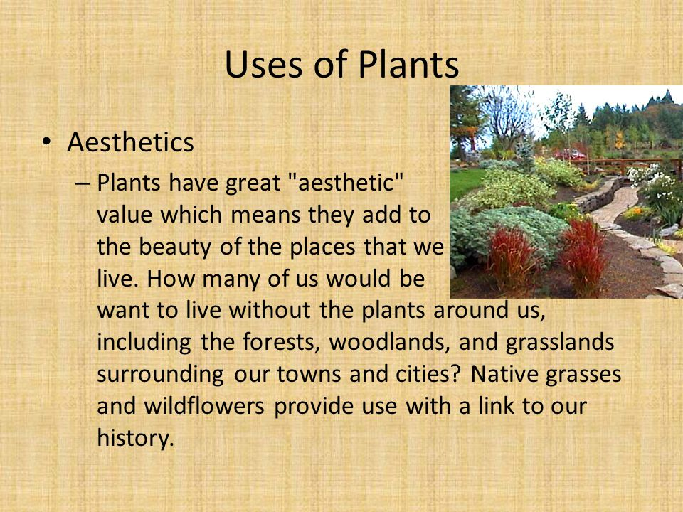 Aesthetics – Plants have great aesthetic value which means they add to the beauty of the places that we live.