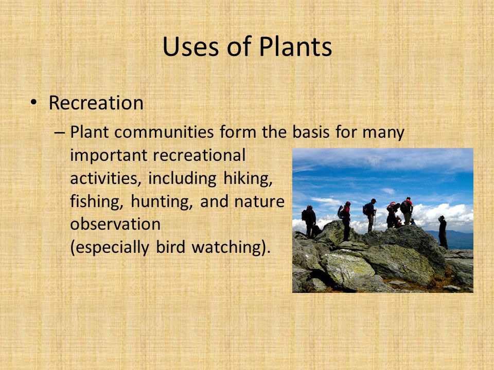 Recreation – Plant communities form the basis for many important recreational activities, including hiking, fishing, hunting, and nature observation (especially bird watching).