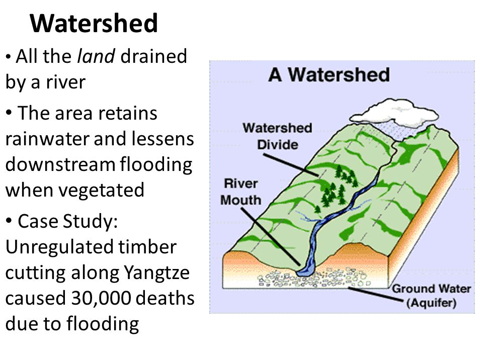 Watershed All the land drained by a river The area retains rainwater and lessens downstream flooding when vegetated Case Study: Unregulated timber cutting along Yangtze caused 30,000 deaths due to flooding