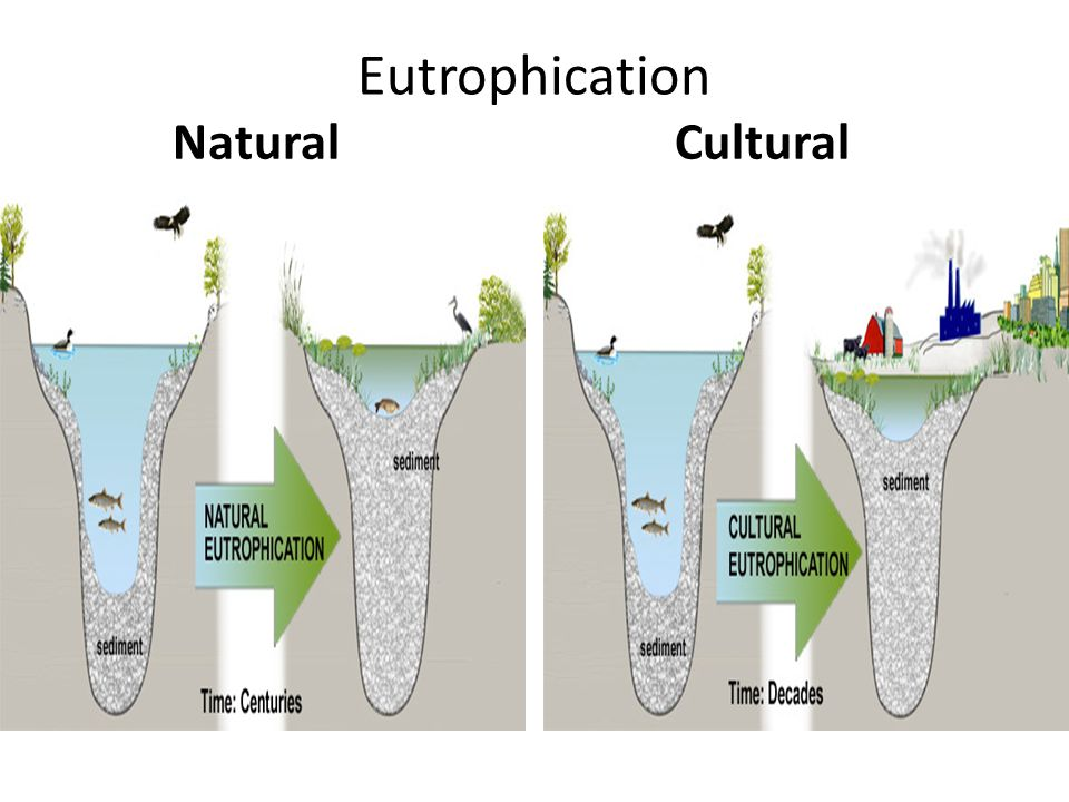Eutrophication Natural Cultural