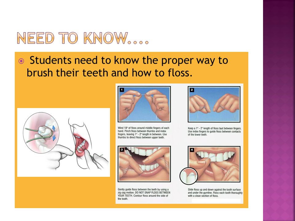  Functions of Teeth:  Incisors - Located in the center front of the mouth.