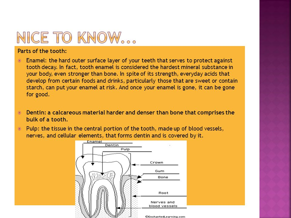 Parts of the tooth:  Enamel: the hard outer surface layer of your teeth that serves to protect against tooth decay.