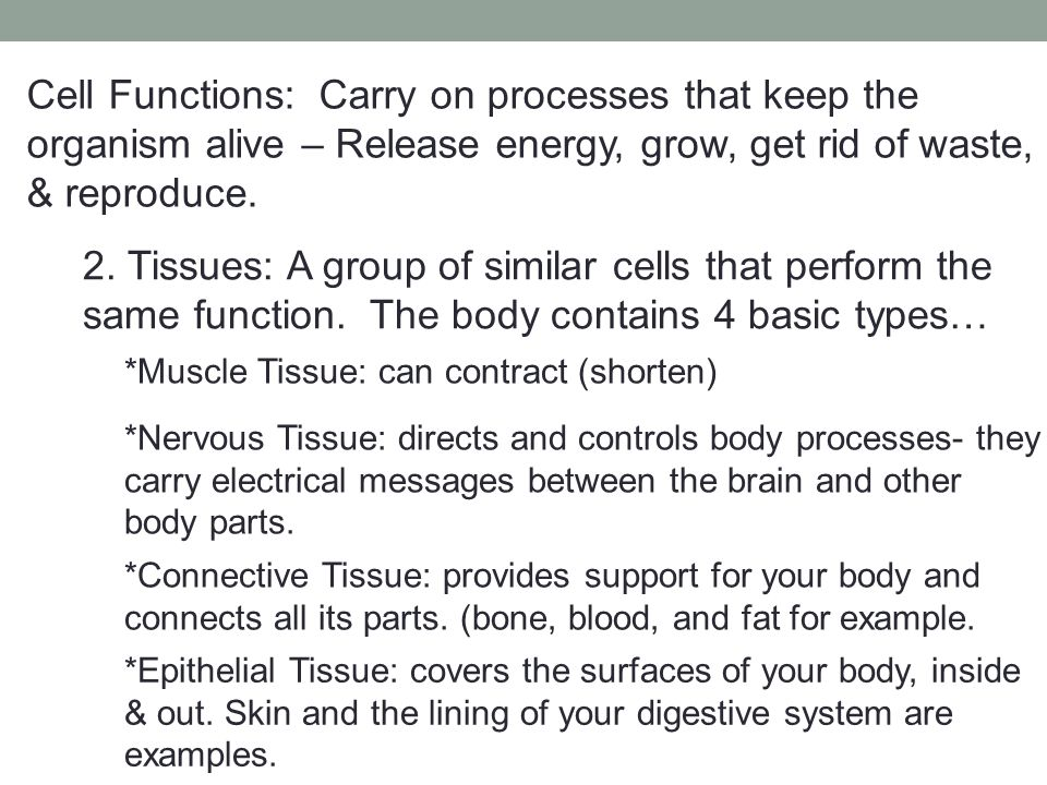 3.Organs: A structure that is composed of different kinds of tissue.