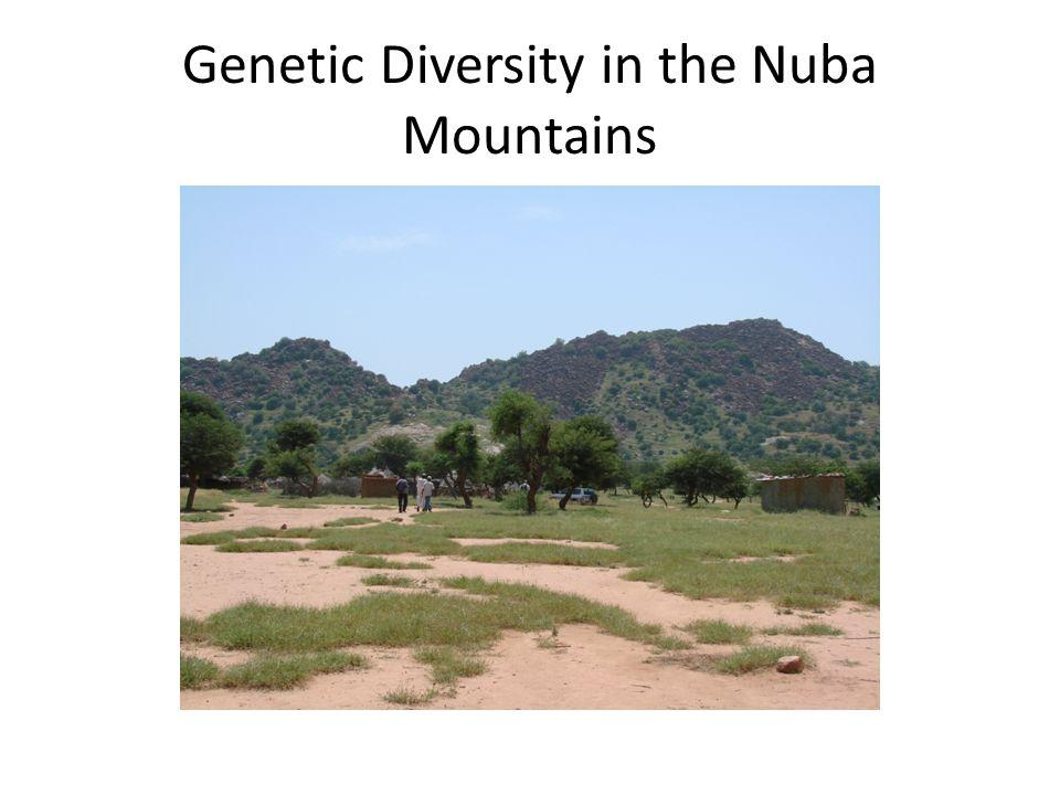 Genetic Diversity in the Nuba Mountains
