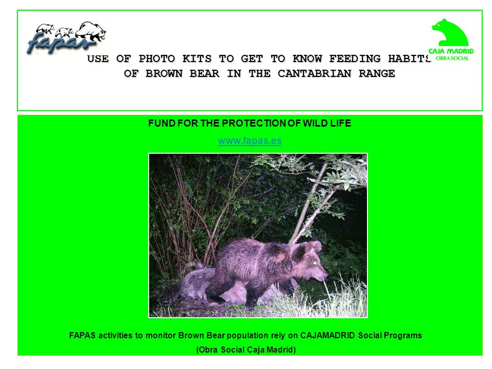 FUND FOR THE PROTECTION OF WILD LIFE www.fapas.es USE OF PHOTO KITS TO GET TO KNOW FEEDING HABITS OF BROWN BEAR IN THE CANTABRIAN RANGE FAPAS activities to monitor Brown Bear population rely on CAJAMADRID Social Programs (Obra Social Caja Madrid)