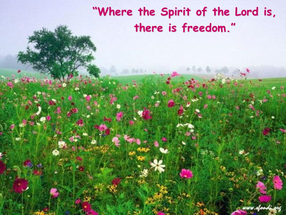 To be guided by the Lord, by his Spirit, by his word: this is true freedom.