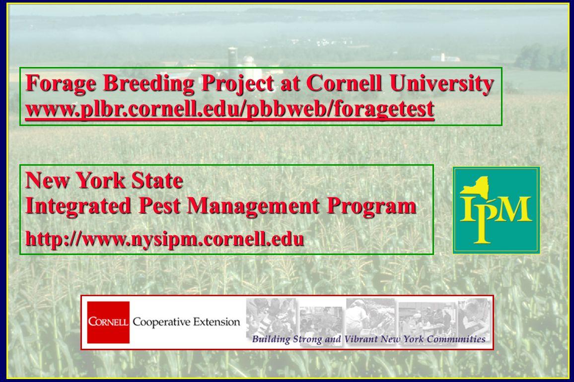 New York State Integrated Pest Management Program http://www.nysipm.cornell.edu Forage Breeding Project at Cornell University www.plbr.cornell.edu/pbbweb/foragetest