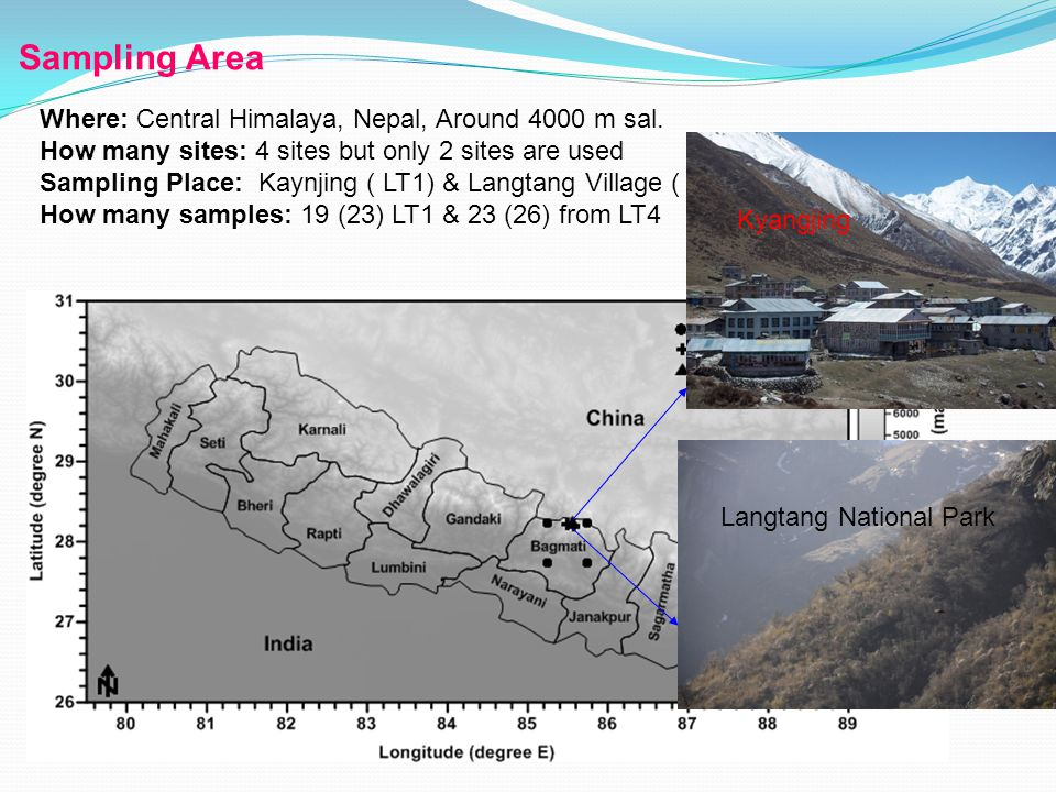 Sampling Area Where: Central Himalaya, Nepal, Around 4000 m sal.