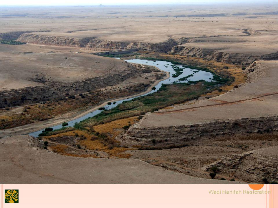 19 Wadi Hanifah Restoration