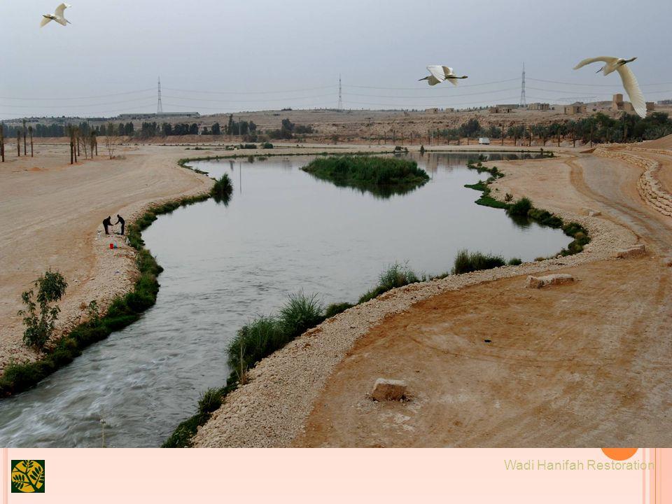 29 Wadi Hanifah Restoration