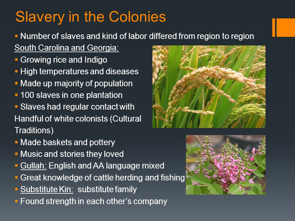 Slavery in the Colonies  Number of slaves and kind of labor differed from region to region South Carolina and Georgia:  Growing rice and Indigo  Hi
