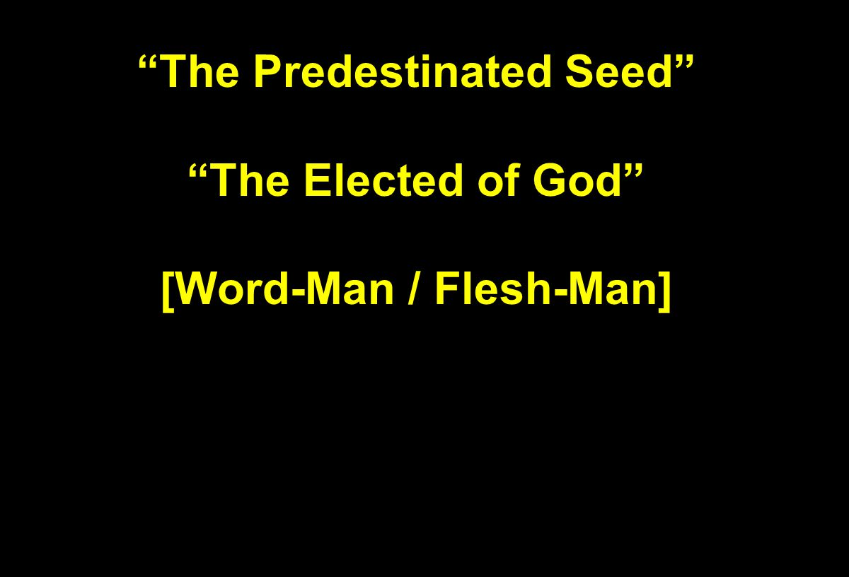 """The Predestinated Seed"" ""The Elected of God"" [Word-Man / Flesh-Man]"