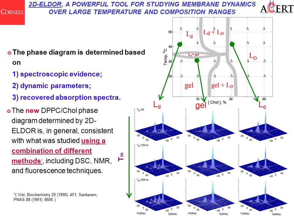 LdLd LoLo gel 2D-ELDOR, A POWERFUL TOOL FOR STUDYING MEMBRANE DYNAMICS OVER LARGE TEMPERATURE AND COMPOSITION RANGES ๏ The new DPPC/Chol phase diagram determined by 2D- ELDOR is, in general, consistent with what was studied using a combination of different methods *, including DSC, NMR, and fluorescence techniques.