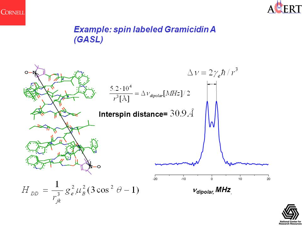 Example: spin labeled Gramicidin A (GASL) dipolar, MHz, Interspin distance=