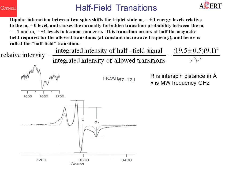 Half-Field Transitions Dipolar interaction between two spins shifts the triplet state m s =  1 energy levels relative to the m s = 0 level, and causes the normally forbidden transition probability between the m s = -1 and m s = +1 levels to become non-zero.