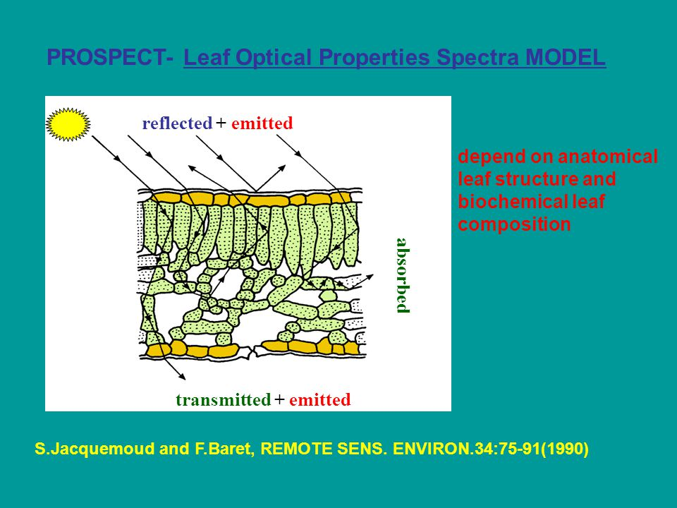 Description of the PROSPECT model N identical layers IsIs Elementary layer: n : refractive index K : global absorption coefficient Surface effects Hemispheric fluxes Global absorption: Specific absorption coefficients Content in absorbing material reflectance  ( )  ( ) transmittance (A.Olioso, S.Jacquemoud,F.Baret, Adaptation of the leaf optical property model PROSPECT to thermal infrared, 2006)