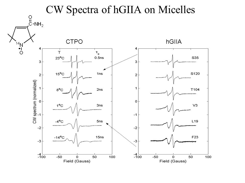 CW Spectra of hGIIA on Micelles hGIIACTPO