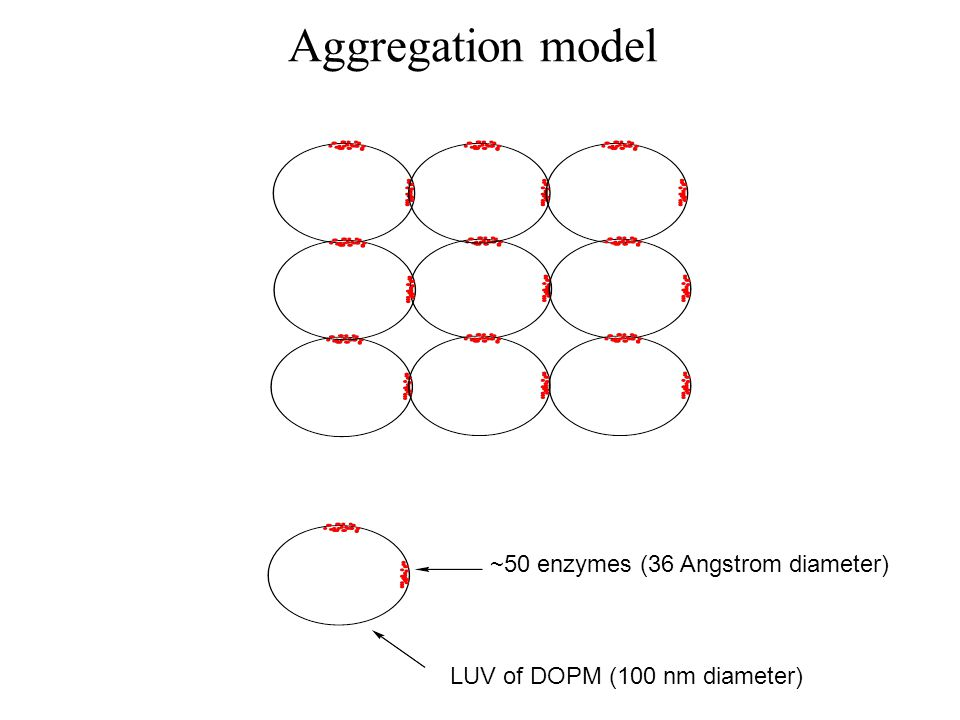 Aggregation model ~50 enzymes (36 Angstrom diameter) LUV of DOPM (100 nm diameter)