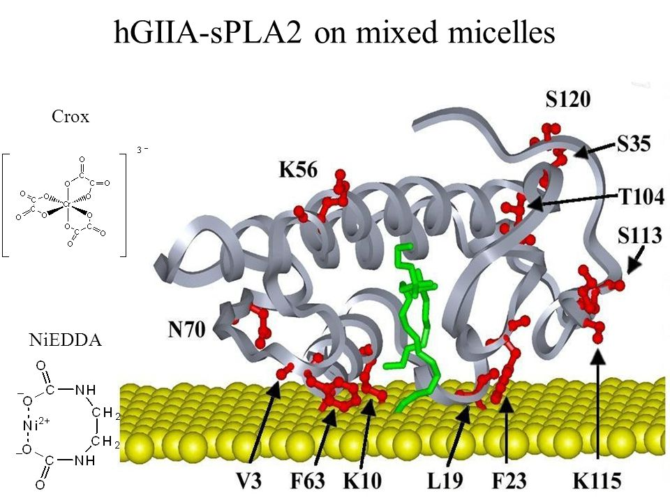 hGIIA-sPLA2 on mixed micelles NiEDDA Crox