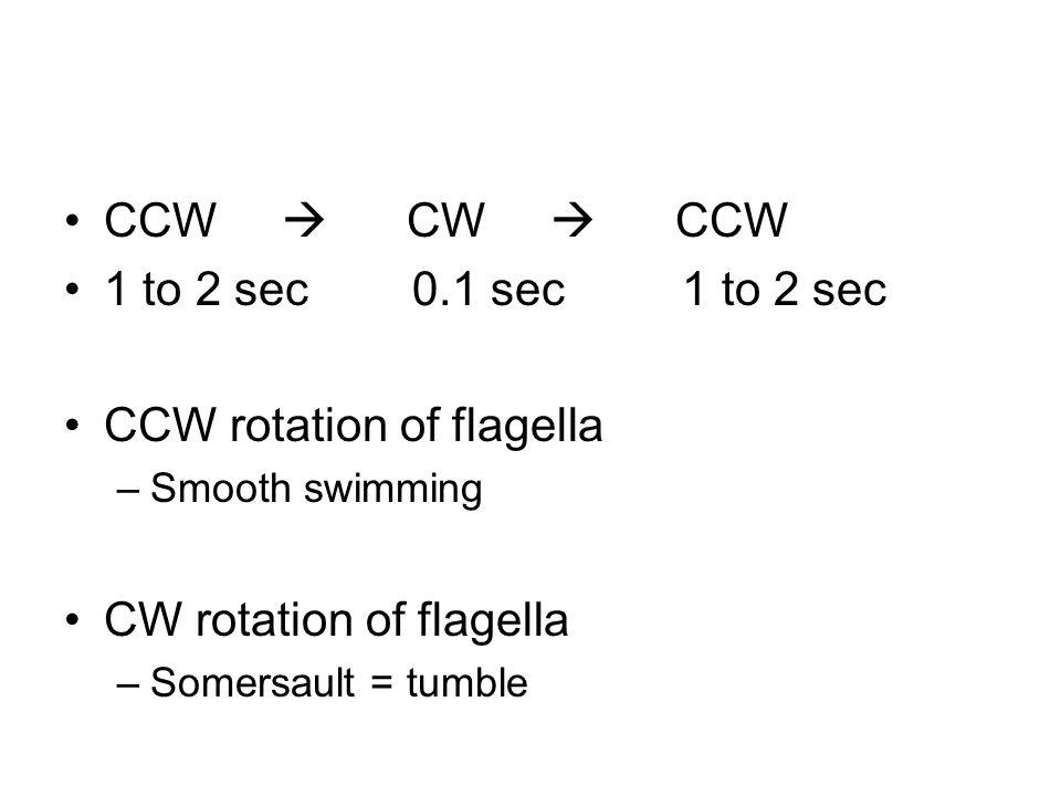 CCW  CW  CCW 1 to 2 sec 0.1 sec 1 to 2 sec CCW rotation of flagella –Smooth swimming CW rotation of flagella –Somersault = tumble