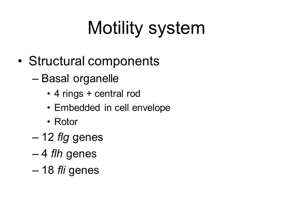 Motility system Structural components –Basal organelle 4 rings + central rod Embedded in cell envelope Rotor –12 flg genes –4 flh genes –18 fli genes