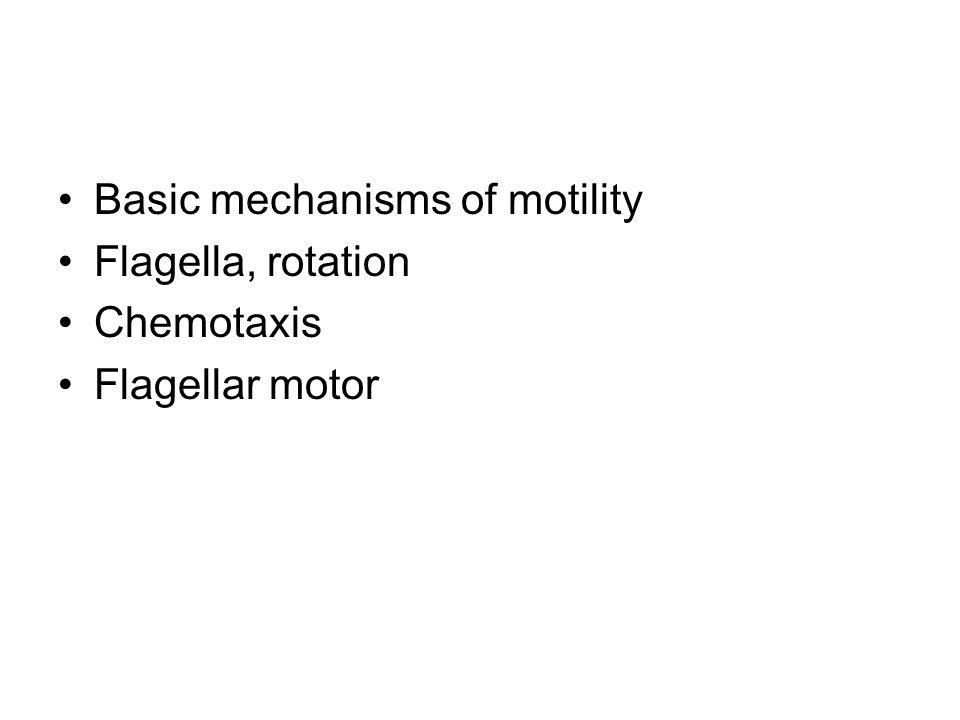Basic mechanisms of motility Flagella, rotation Chemotaxis Flagellar motor