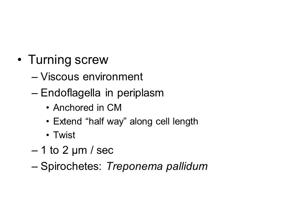Turning screw –Viscous environment –Endoflagella in periplasm Anchored in CM Extend half way along cell length Twist –1 to 2 μm / sec –Spirochetes: Treponema pallidum