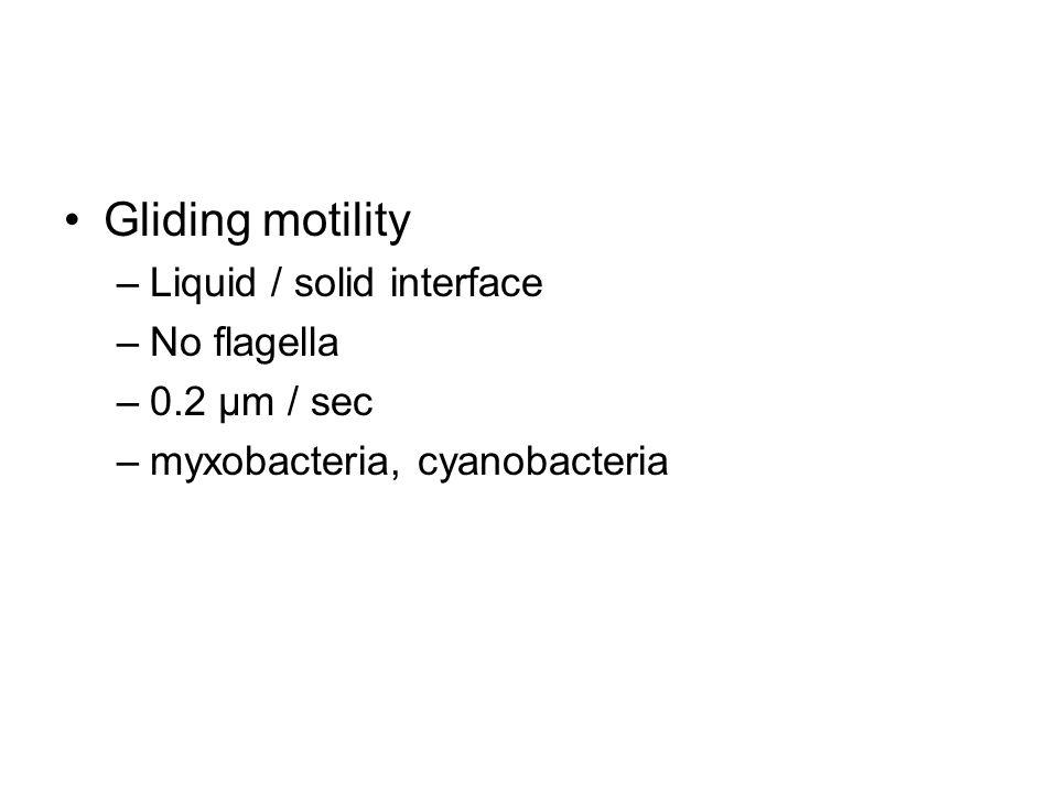 Gliding motility –Liquid / solid interface –No flagella –0.2 μm / sec –myxobacteria, cyanobacteria