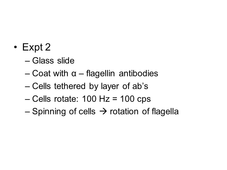 Expt 2 –Glass slide –Coat with α – flagellin antibodies –Cells tethered by layer of ab's –Cells rotate: 100 Hz = 100 cps –Spinning of cells  rotation