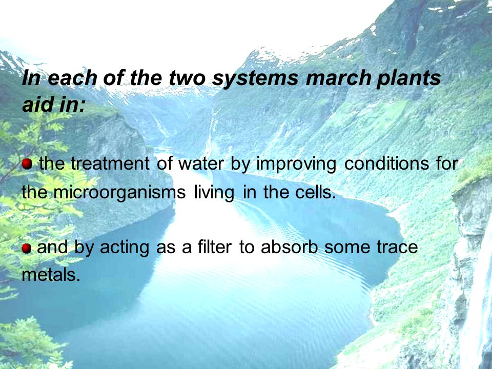 In each of the two systems march plants aid in: the treatment of water by improving conditions for the microorganisms living in the cells. and by acti