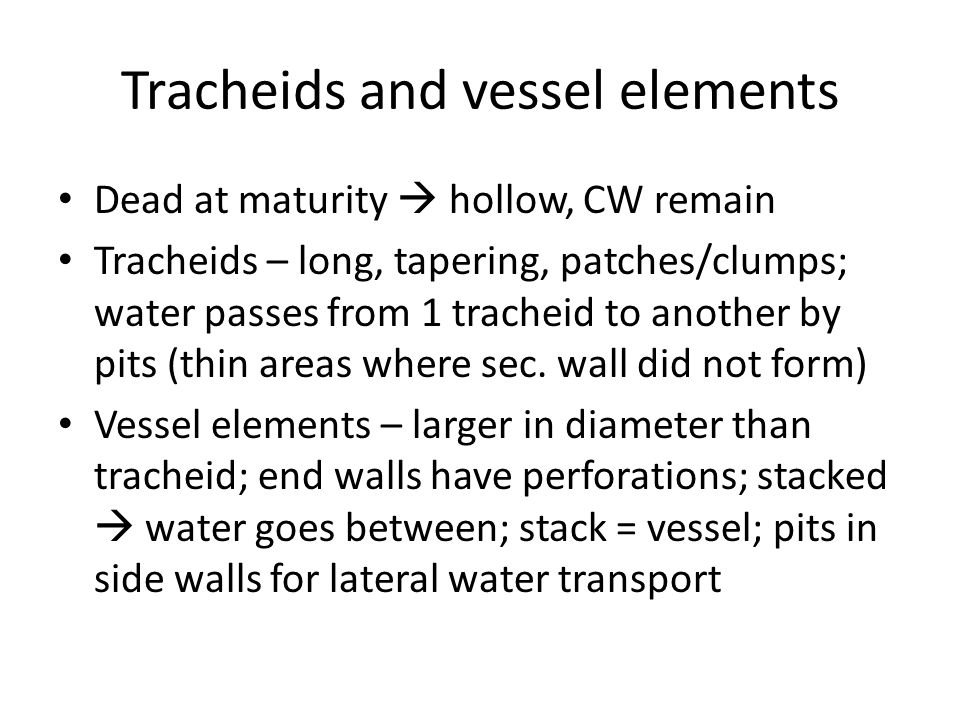 Tracheids and vessel elements Dead at maturity  hollow, CW remain Tracheids – long, tapering, patches/clumps; water passes from 1 tracheid to another by pits (thin areas where sec.