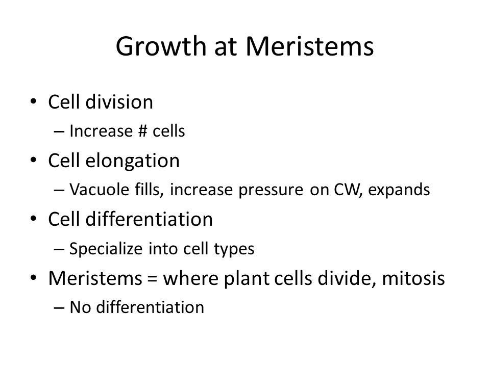 Growth at Meristems Cell division – Increase # cells Cell elongation – Vacuole fills, increase pressure on CW, expands Cell differentiation – Specialize into cell types Meristems = where plant cells divide, mitosis – No differentiation