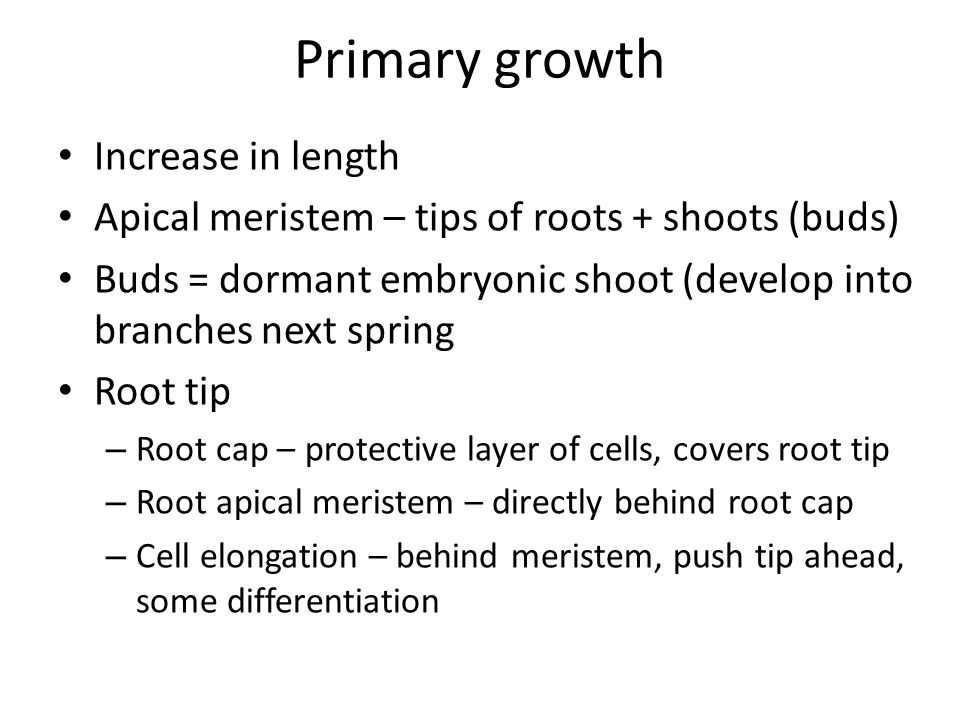 Primary growth Increase in length Apical meristem – tips of roots + shoots (buds) Buds = dormant embryonic shoot (develop into branches next spring Root tip – Root cap – protective layer of cells, covers root tip – Root apical meristem – directly behind root cap – Cell elongation – behind meristem, push tip ahead, some differentiation