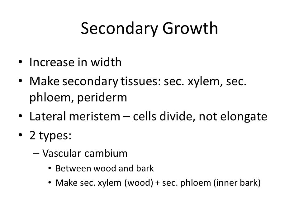 Secondary Growth Increase in width Make secondary tissues: sec.