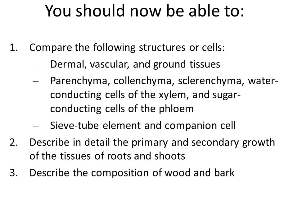 You should now be able to: 1.Compare the following structures or cells: – Dermal, vascular, and ground tissues – Parenchyma, collenchyma, sclerenchyma, water- conducting cells of the xylem, and sugar- conducting cells of the phloem – Sieve-tube element and companion cell 2.Describe in detail the primary and secondary growth of the tissues of roots and shoots 3.Describe the composition of wood and bark