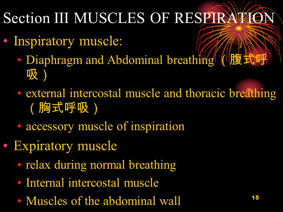 16 Thoracic Walls and Muscles of Respiration
