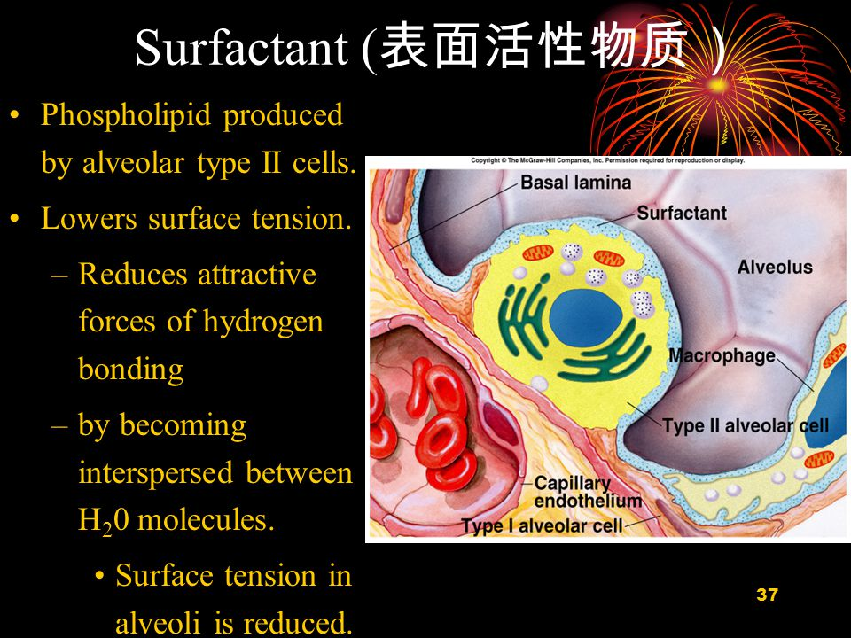 38 Area dependence of Surfactant action Tension Area Surfactant Increase Area Saline Slider - Change Surface Area Saline Decrease Area Low S/unit Area High S/unit Area