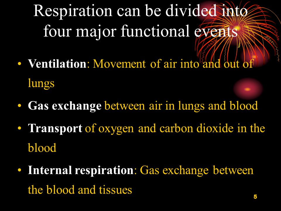 6 Respiratory System Functions Gas exchange: Oxygen enters blood and carbon dioxide leaves Regulation of blood pH: Altered by changing blood carbon dioxide levels Voice production: Movement of air past vocal folds makes sound and speech Olfaction: Smell occurs when airborne molecules drawn into nasal cavity Protection: Against microorganisms by preventing entry and removing them Metabolism: Synthesize and metabolize different compounds (Nonrespiratory Function of the Lung)