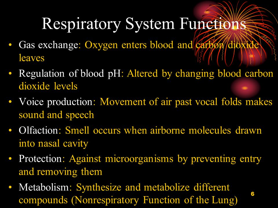 7 Section I ANATOMY OF THE RESPIRATORY TRACT