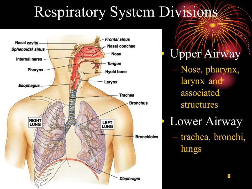 9 Conducting Zone All the structures air passes through before reaching the respiratory zone.