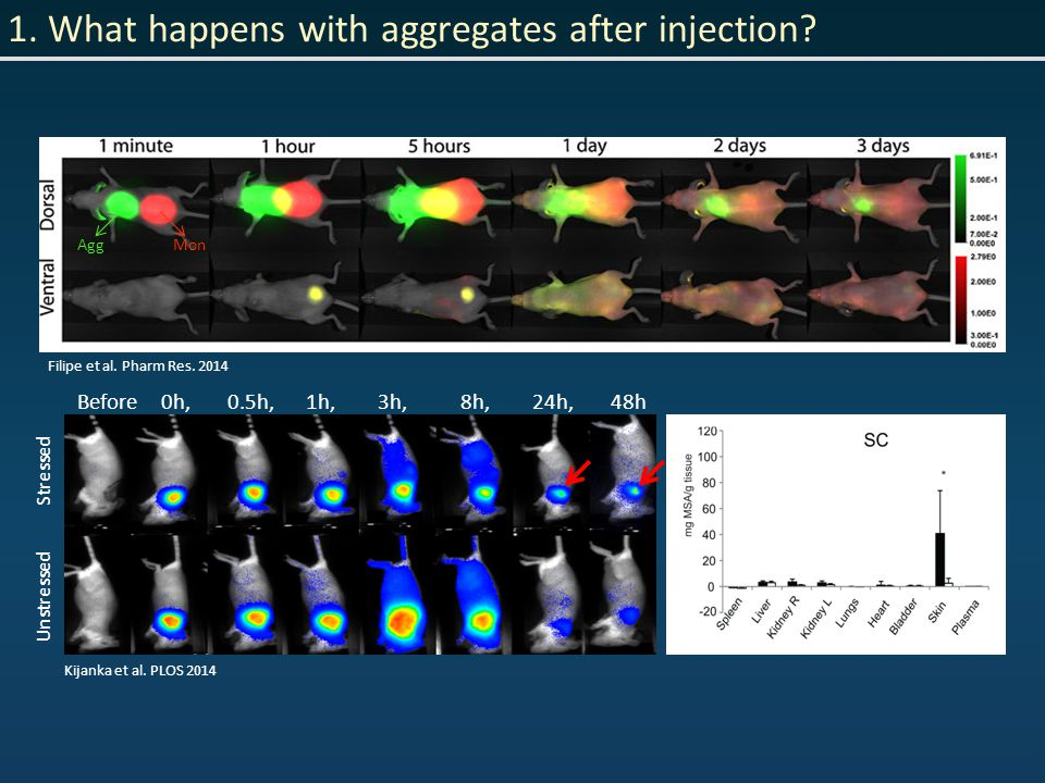 1. What happens with aggregates after injection.