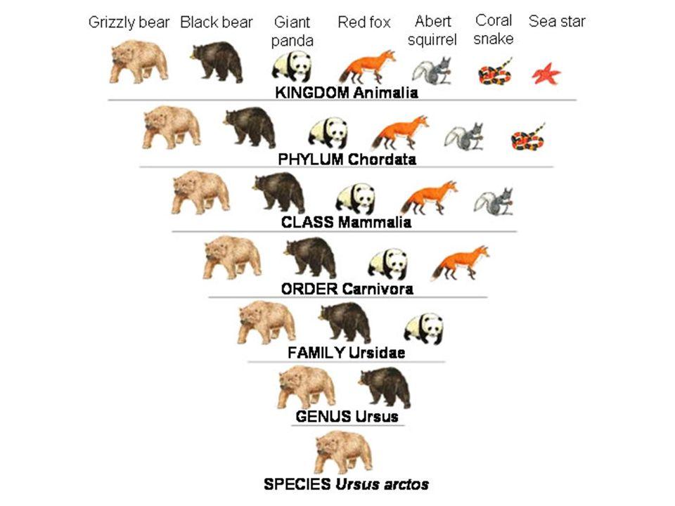 Let's classify...