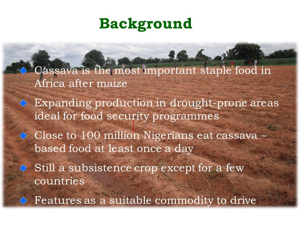 Background Cassava is the most important staple food in Africa after maize Expanding production in drought-prone areas ideal for food security programmes Close to 100 million Nigerians eat cassava – based food at least once a day Still a subsistence crop except for a few countries Features as a suitable commodity to drive Africa's economic development