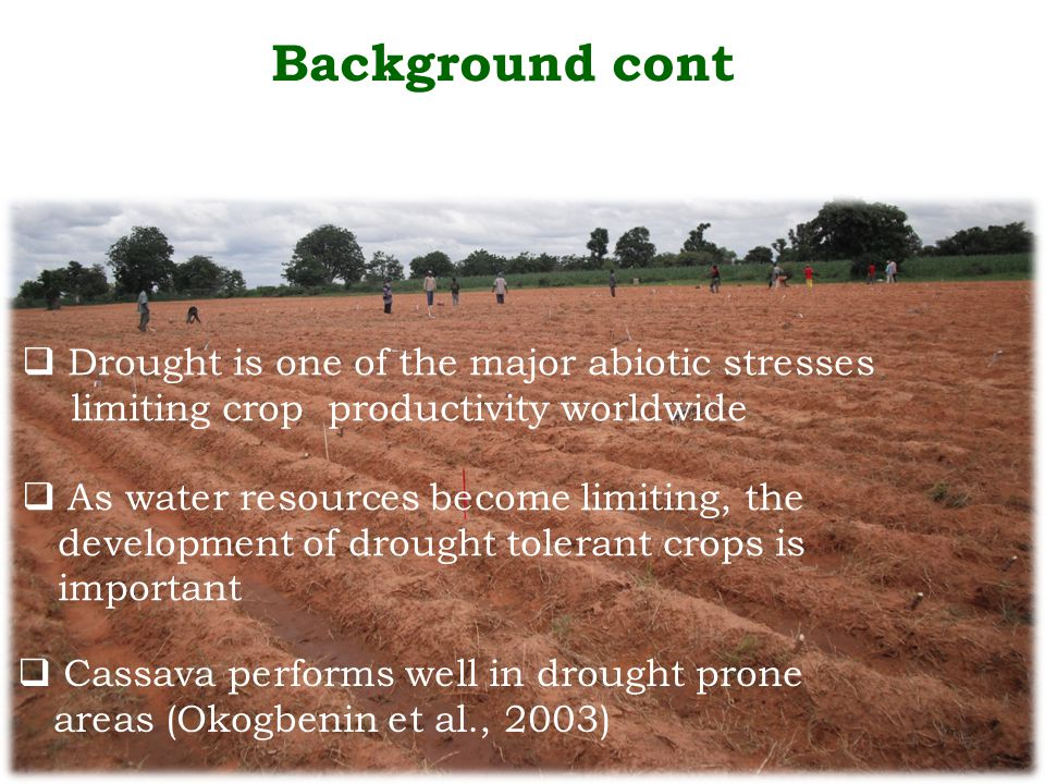 Background cont  Drought is one of the major abiotic stresses limiting crop productivity worldwide  As water resources become limiting, the development of drought tolerant crops is important  Cassava performs well in drought prone areas (Okogbenin et al., 2003)