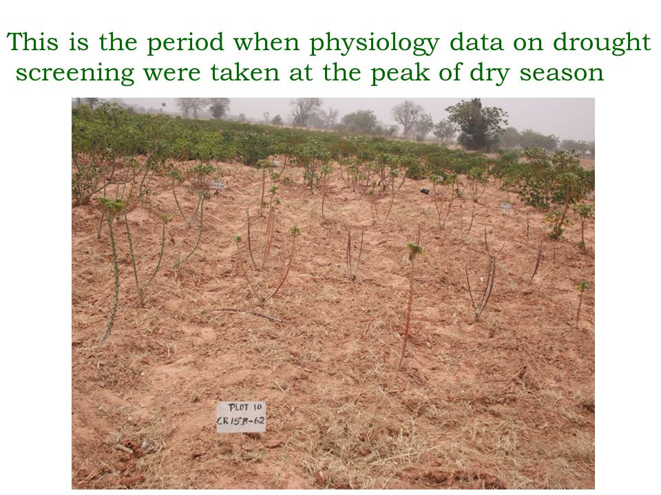 This is the period when physiology data on drought screening were taken at the peak of dry season